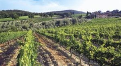 Montalcino wine tasting wine Vineyards