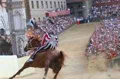 Siena horses Tuscany